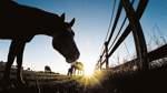 Streit zwischen Pferdehändler und Veterinäramt zieht sich weiter