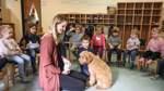 Ein Hund im Kindergarten