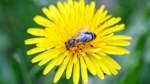 Futter für Insekten