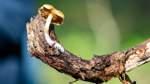 Auch Pilze leiden unter dem Klimawandel