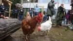 Ein neues Zuhause für zehn Hühner